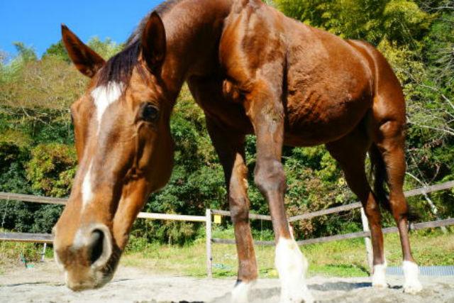 【千葉・乗馬】初心者歓迎!馬とのんびり楽しむ30分の乗馬レッスン!