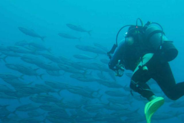 【山形・酒田市・体験ダイビング】海に潜る前に体験しよう!プール体験ダイビング