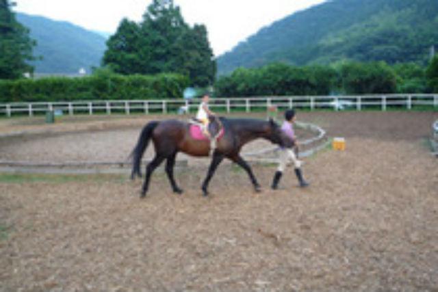 【静岡県東伊豆・乗馬体験】天城の自然の中で馬と触れ合おう!約10分・引き馬体験