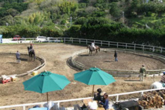 【静岡県東伊豆・乗馬体験】初めての方から、上級者まで!30分・レッスン乗馬