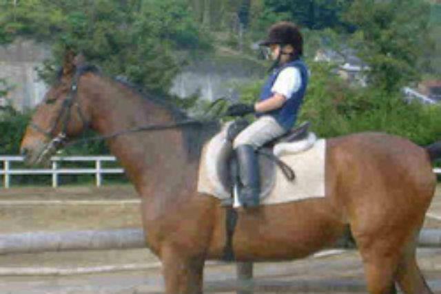 【静岡県東伊豆・乗馬体験】お客様のレベルに合わせて指導します!45分・レッスン乗馬