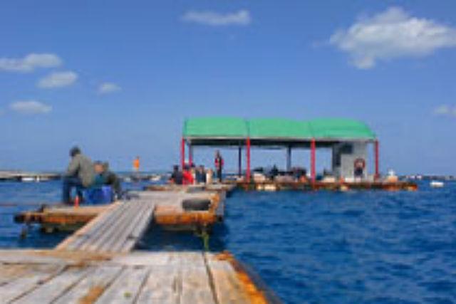 【沖縄県本部町・釣り】イカダをまるごと貸切!星空の下で楽しむ海釣り夜コース