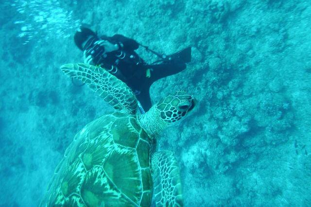 【宮古島・ファンダイビング】日本最大級の巨大なサンゴ礁!八重干瀬で2ダイブのボートダイビング