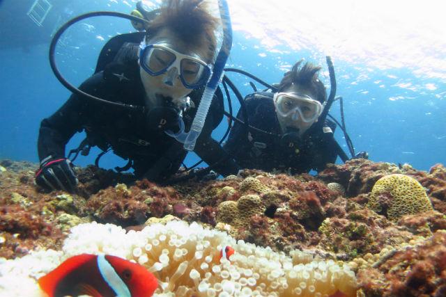 【宮古島・体験ダイビング】ボートで宮古の海を堪能!たっぷり楽しめる2ダイブプラン