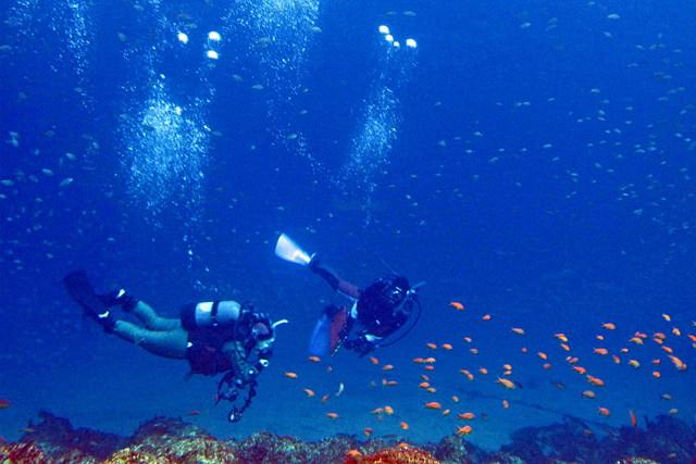 【静岡県沼津・ファンダイビング】平日限定!1泊2日の4ダイブで、海を楽しみ放題!