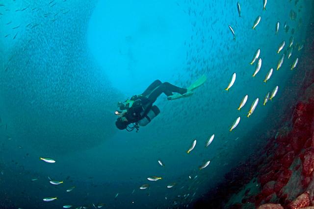 【静岡県沼津・体験ダイビング】初めての方大歓迎!伊豆の海を堪能できる体験ダイビング!