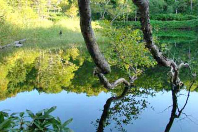 【群馬・万座温泉・森林セラピー】万座温泉の深い森で天然林セラピー