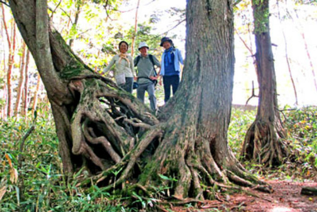 【群馬・万座温泉・森林セラピー・セラピスト派遣】森林セラピストのガイドによる天然林セラピー