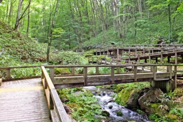 【群馬・鹿沢園地・森林セラピー】初心者もOK!鹿沢園地で森林浴セラピー