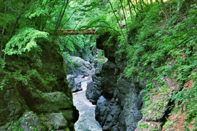 【群馬・吾妻渓谷・森林セラピー】吾妻渓谷の渓畔林を散策セラピー
