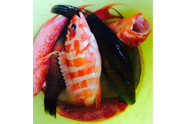 【石垣島・海釣り&シュノーケリング・1日】魚を釣ったり、泳いだり!海を満喫プラン