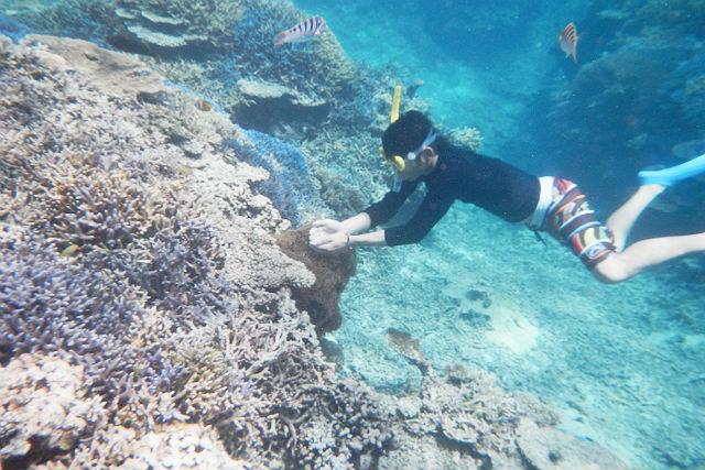 【沖縄・小浜島発・シュノーケリング】夕方発!お魚畑サンゴ礁ツアーで、カラフルな海の世界へ!