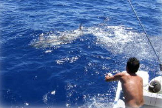 【石垣島・釣り体験】巨大魚狙いのトローリング!石垣島遠海で大物釣りコース!