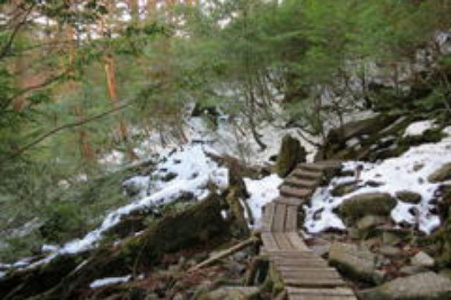 【屋久島・エコツアー】より自然を満喫できる、見どころ充実の縄文杉Bコース