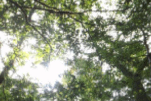 【屋久島・エコツアー】三神杉を目指して険しい山道を行く!龍神杉コース