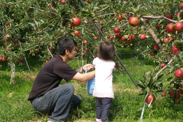 【群馬・吾妻・りんご狩り】首都圏からも有名温泉地からも近い!アットホームな果樹園