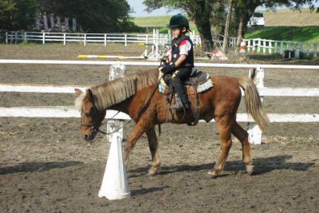 【千葉県我孫子市・乗馬体験】自然を感じてリラックス。60分の乗馬体験!
