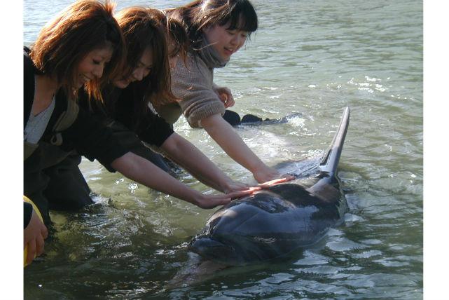 【静岡・イルカウォッチング】イルカと至近距離でふれあえます!ドルフィンビーチ
