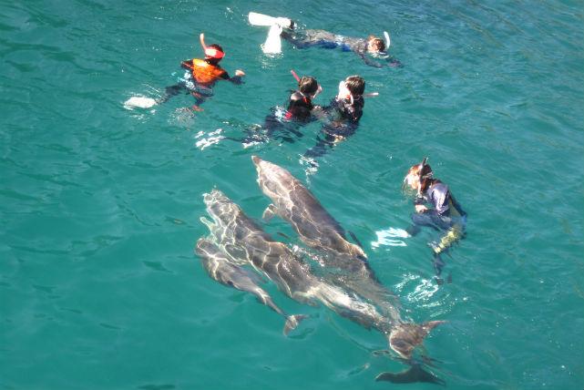 【静岡・イルカウォッチング】イルカと一緒に泳ごう!ドルフィンスノーケルプラン