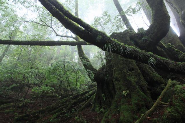 【屋久島・エコツアー】初心者向け!屋久島の自然を楽しむ、天文の森トレッキング!