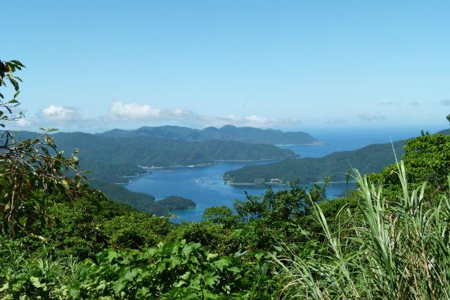 【奄美大島・トレッキング】7合目から登山スタート!奄美の最高峰、湯湾岳をラクラク楽しもう!