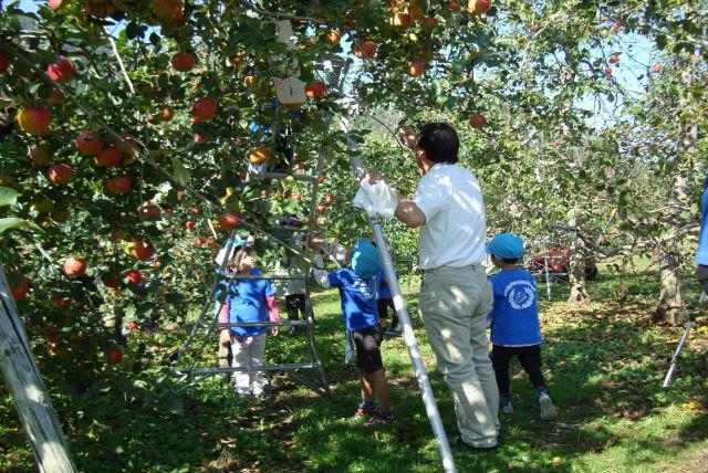 【長野県安曇野市・りんご狩り】食べ放題!飲み放題!おみやげ付きのりんご狩り