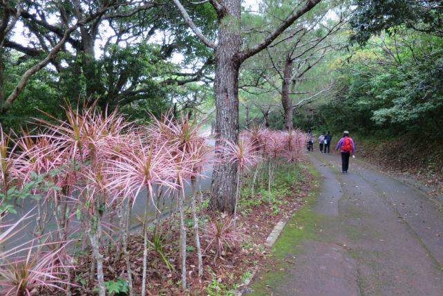 【石垣島・トレッキング】自然の楽園!バンナ岳で動植物観察トレッキングツアー