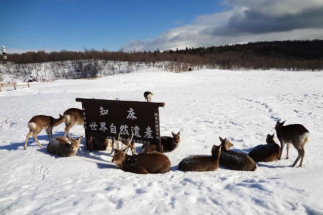 【北海道知床・トレッキング】青白い煌めき!フレペの氷瀑・スノーシュー体験ツアー