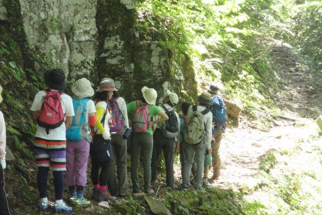 【鳥取県八頭郡・トレッキング】緑に癒されよう!ワサビ谷トレッキングツアー