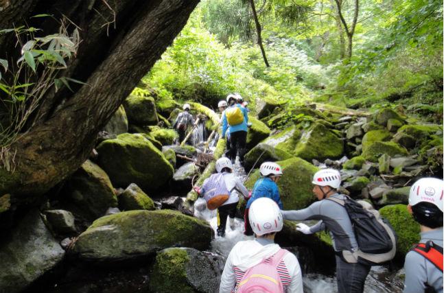 【鳥取県・半日・キャニオニング】ワサビ谷の自然をめいっぱい満喫! 沢登り・半日コース