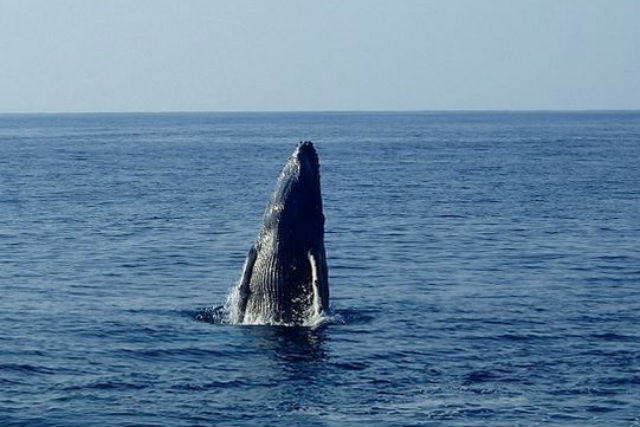 【奄美大島・ホエールウォッチング・1日】季節限定ツアー!1日じっくりクジラ探索!
