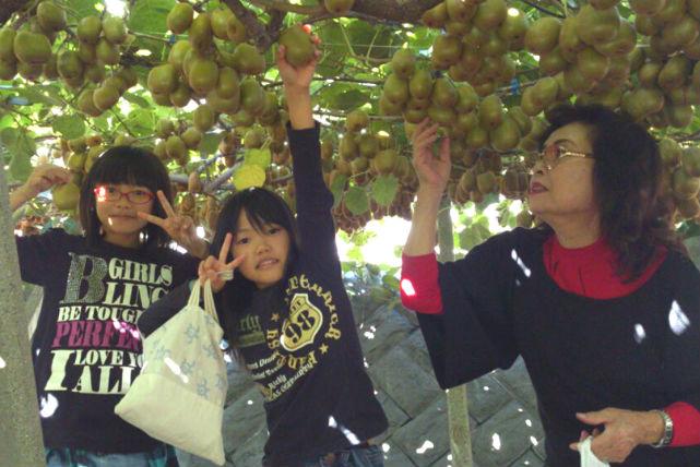 【山梨市・キウイ詰め放題】果樹園のキウイを詰め放題!味には絶対の自信あり!