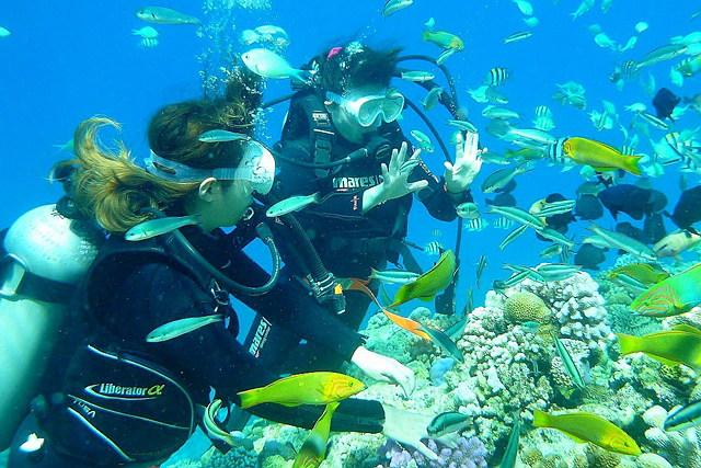 【沖縄県名護/瀬底島・フライボード】充実の海遊び!フライボード&ビーチ体験ダイビング