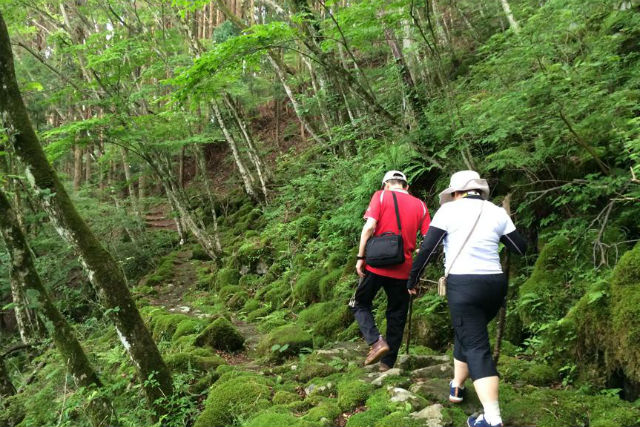 【三重県美杉町・森林セラピー】美杉の森で心と体を癒やそう!森林セラピー