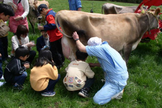 【福井・勝山市・牧場体験】乳搾りとバター作りを楽しめる!牧場体験