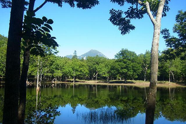 【知床・トレッキング】知床の原生林と、まぼろしの沼・ポンホロ沼に行ってみよう!
