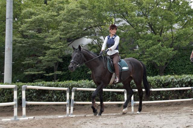 【埼玉・乗馬】乗馬ライセンス5級を取ろう!3日間完結コース★ドリンク付き