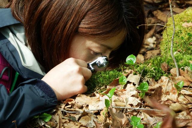 【青森・十和田・ガイドツアー】約300種類も生息!奥入瀬渓流でコケの魅力に触れる