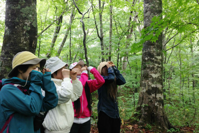 【青森・十和田・ガイドツアー】蔦の森でコケ観察。天然の苔庭をゆったりと歩こう