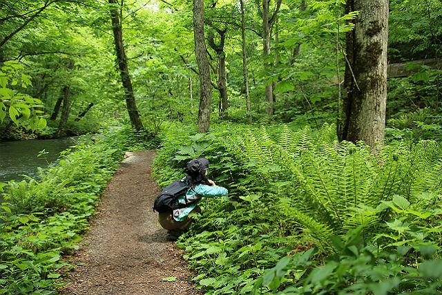 【青森・十和田・ガイドツアー】初心者向け!奥入瀬渓流で気軽にシダ植物を観察しよう
