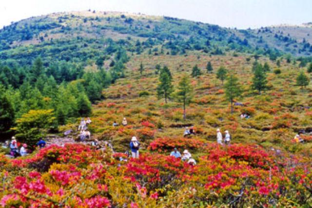【長野発・湯ノ丸山・登山】溶岩ドームの湯ノ丸山を登る、地蔵峠一周コース