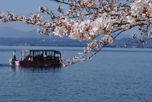 【琵琶湖・1泊2日・クルージング】桜遊覧船で春を満喫!お花見プラン