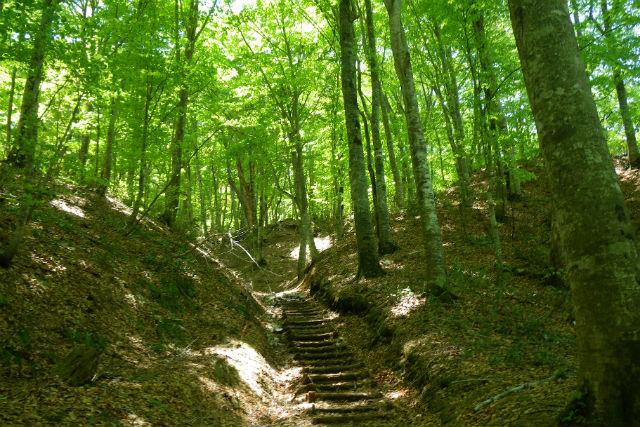 【青森・弘前・エコツアー】震災復興支援プラン!ブナ林を歩きながら暗門第一の滝を目指す