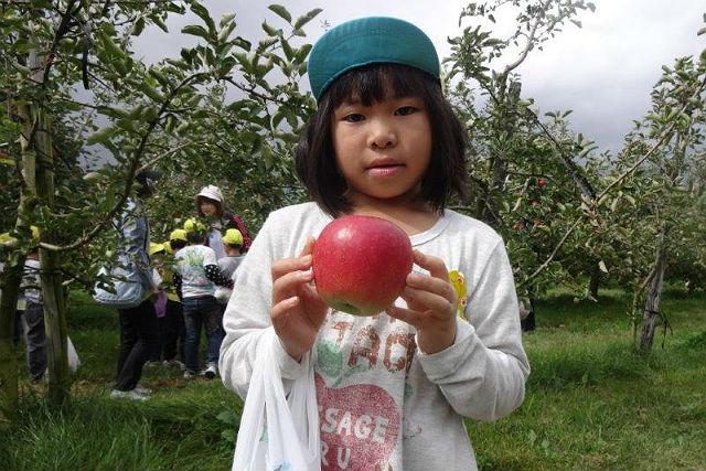 【福島・りんご狩り】30分食べ放題!こだわり尽くしの極上りんごを味わおう