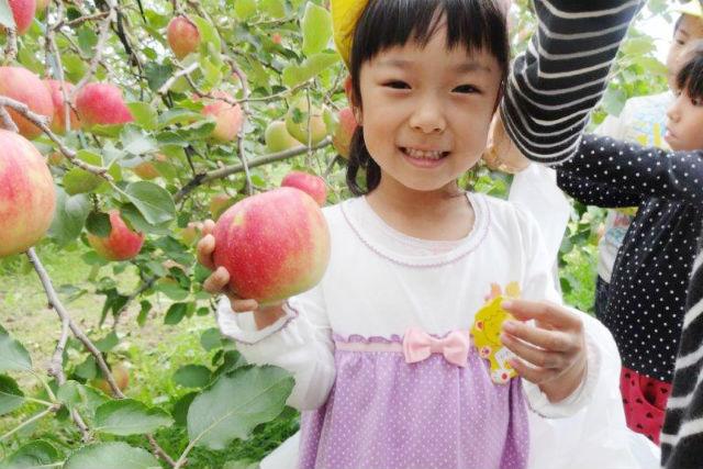 【福島・りんご狩り】30分食べ放題!さらに、りんご4個お持ち帰りOK!