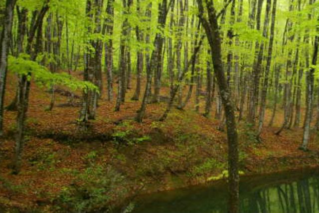 【新潟・十日町・ハイキング】森の恵みで、心も身体も美人に!「心美人」林ハイキング