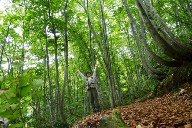 【新潟県十日町・エコツアー】旬の香に包まれて。朝のブナ林散策ツアー