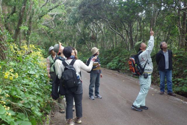 【沖縄・国頭村・エコツアー】沖縄北部の自然を堪能!森林散策・3時間コース