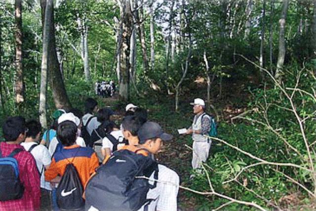 【新潟・南魚沼・自然体験】マイナスイオンたっぷりの山で森林浴!ブナの森散策体験