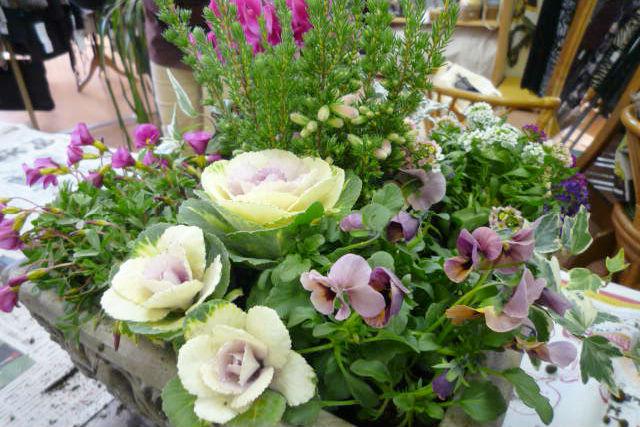 【埼玉県・ガーデニング体験】花とふれあう喜び。ステキな寄植えを作ろう